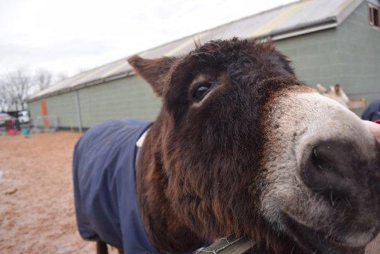 Knottingley, UK: One happy and beautiful donkey!