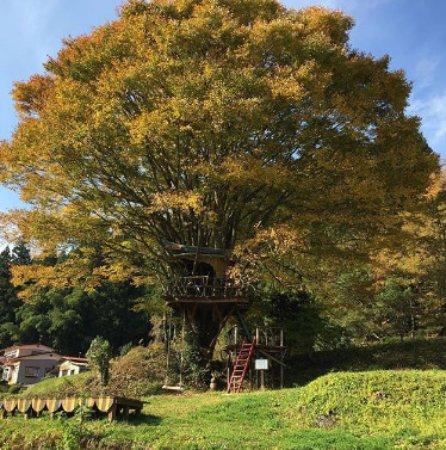 Peace Jam: 秋のツリーハウス