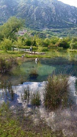 Morinj, Czarnogóra: image-0-02-05-65cb3f080c0df017cee0996da9654ae7f7faf5d5425e53568bdc6fb8d691a71d-V_large.jpg