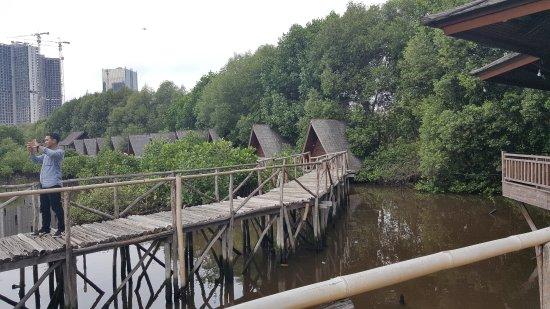 Mangrove Park Near Skyscraper Picture Of Wisata Alam Mangrove