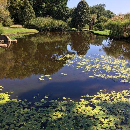 康斯坦博西国家植物园照片