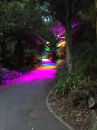 Pukekura Park: Pathway to the fernery