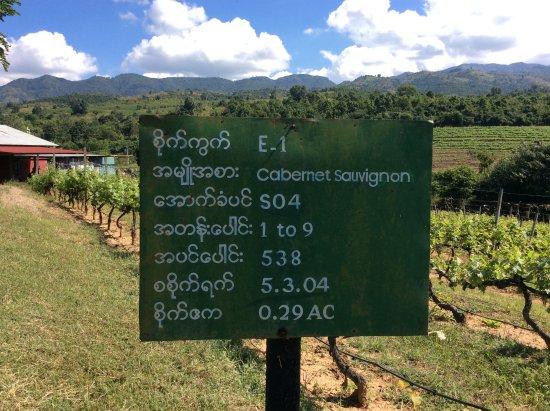 Vignes de vin français - Picture of Red Mountain Estate Vineyards ...