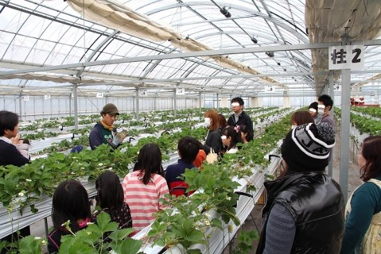 Nonhoi Strawberry Farm Toyohashi