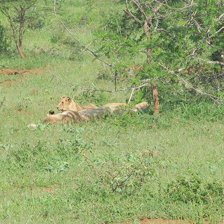 Heritage Day Tours & Safaris: photo2.jpg