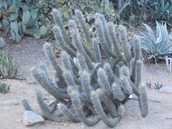Catalina Island Chamber of Commerce & Visitors Bureau: Botanic Garden
