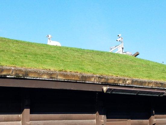 Al Johnson's Swedish Restaurant & Butik: Lone Lookout Goat