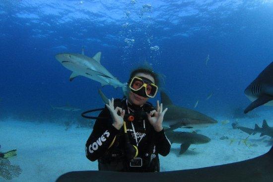 Stuart Cove's Dive Bahamas: IMG_8931_large.jpg