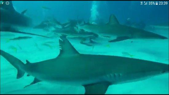 Stuart Cove's Dive Bahamas: Screenshot_20171218-233942_large.jpg