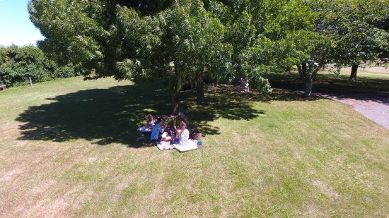 Renwick, Nueva Zelanda: Shady trees around our park-like grounds, perfect for your picnic!