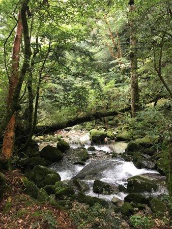 Shiratani Unsuikyo Valley : Lots of moss