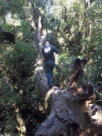 """Chalatenango Department, El Salvador: No apto para miedosos, el """"puente"""" que se debe cruzar en la caminata """"La Peña Rajada"""""""
