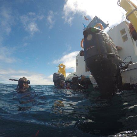 Planet ocean dive center san cristobal ecuador updated for Dive planet