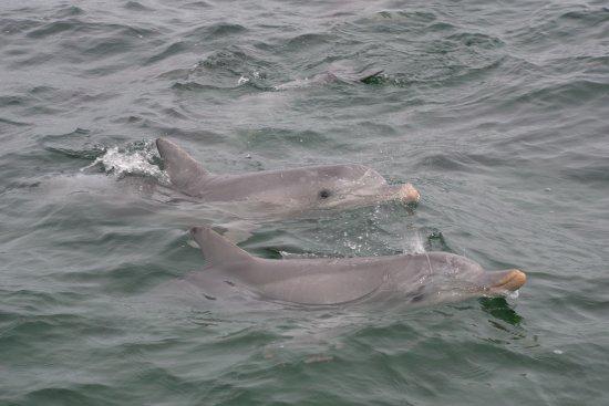 Kangaroo Island Marine Adventures: dolphins