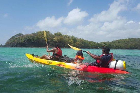 Sortie guidée en kayak dans la baie...