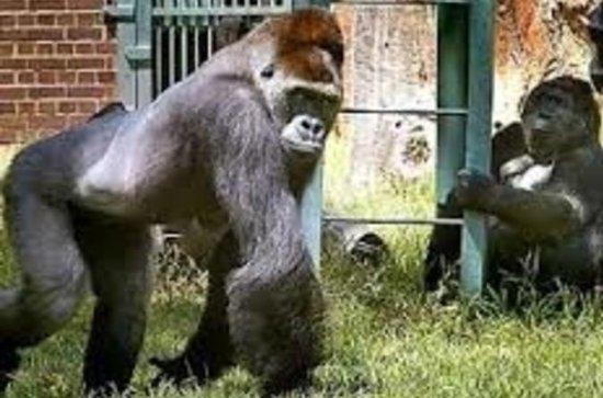 Ammissione generale dello Zoo di
