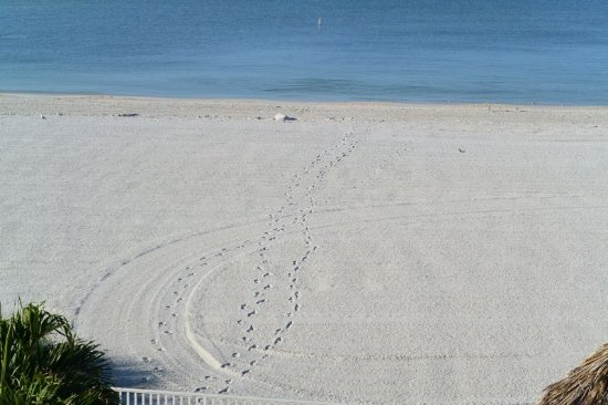 Sandy Shores張圖片