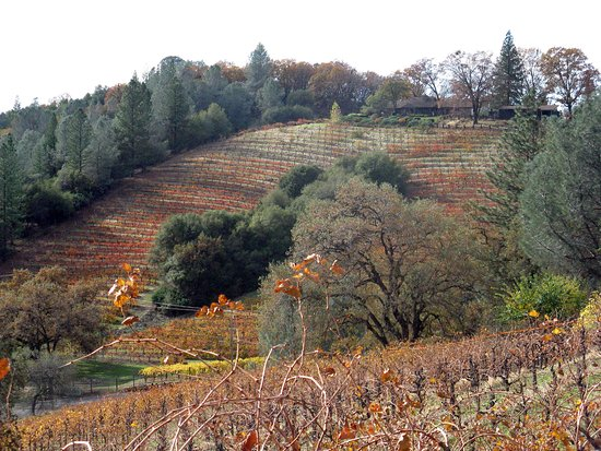 Holly's Hill Vineyard