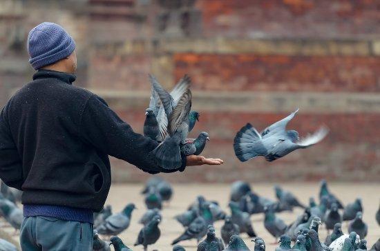Kathmandu - pigeons feeding