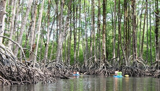 ‪‪Myeik (Mergui) Archipelago‬, ميانمار: Mangrove Forest, Lampi National Park‬