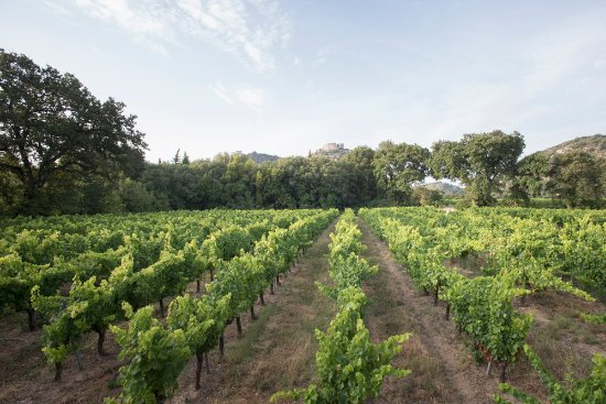 Saint-Victor-la-Coste, Frankrijk: Vigne