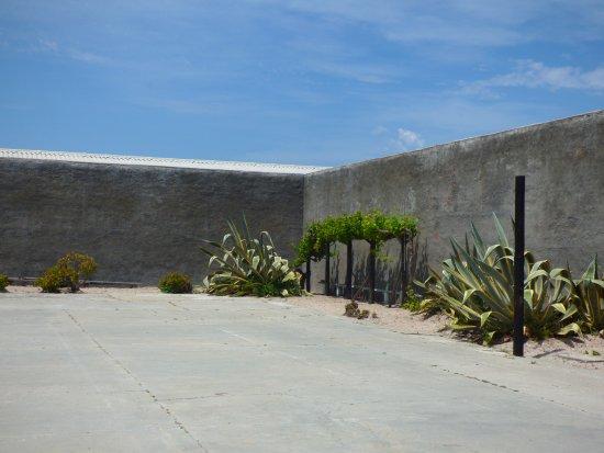 Robben Island: Garden ?