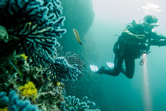 Casares, Spanyol: Algeciras scubacourse.net diving coral
