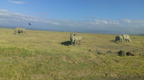 Faru Safaris