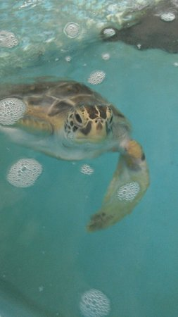 Sea Turtle Hospital at Whitney Lab