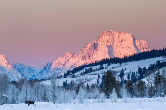 Jackson Hole Eco Tour Adventures: Winter in Grand Teton National Park