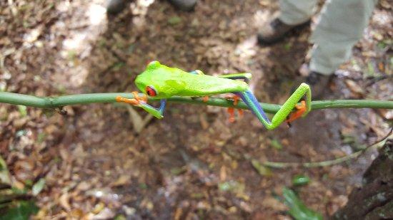 Frogs Heaven: 20171219_112132_large.jpg