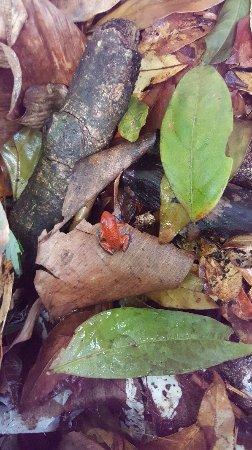 Frogs Heaven: 20171219_110146_large.jpg