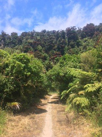 Kahurangi National Park, نيوزيلندا: track
