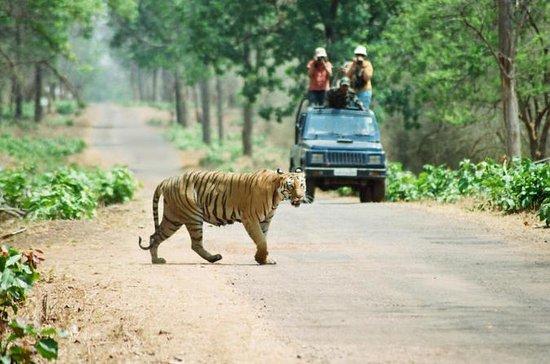 Tour en la selva de Chitwan Safari