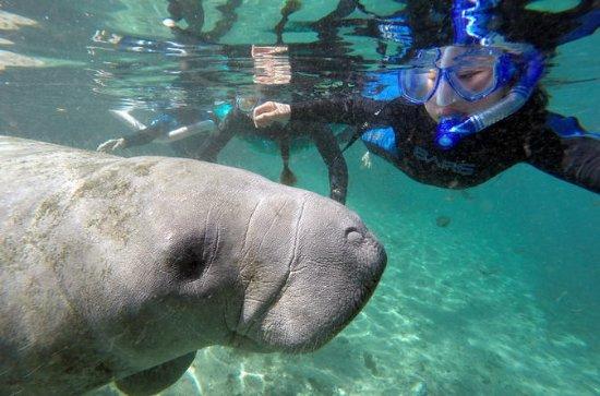 Nadar com a aventura do peixe-boi!