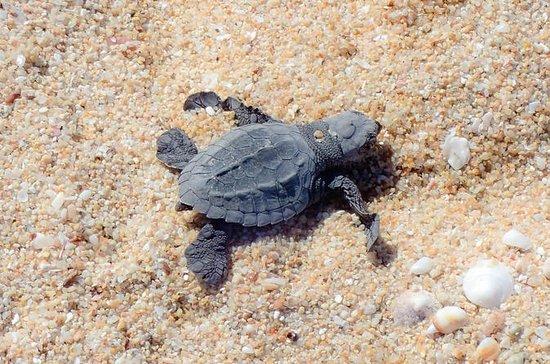 Snorkel and Sea Turtle Adventure!