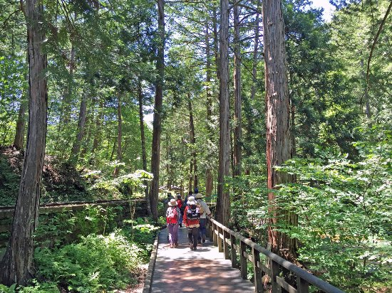 Akasawa Natural Recreational Forest
