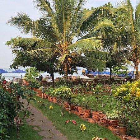 Palm Tree Heritage: photo0.jpg