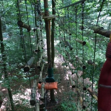 Schwindelfrei der Kletterwald