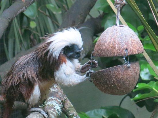 Hamilton Zoo: les petits singes
