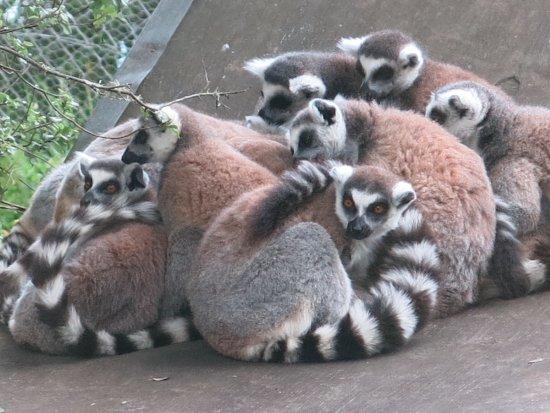 Hamilton Zoo: so cute