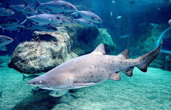 Tiburon picture of aquarium costa de almeria roquetas Aquarium en roquetas de mar