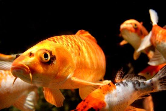 Aquarium photo de roquetas de mar aquarium roquetas de Aquarium en roquetas de mar