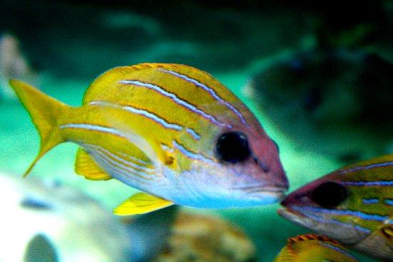 Aquarium Picture Of Roquetas De Mar Aquarium Roquetas