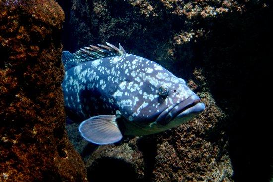 Mero picture of roquetas de mar aquarium roquetas de Aquarium en roquetas de mar