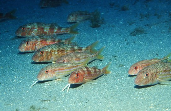 Aquarium Costa De Almeria