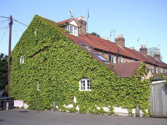 Marlow Place: Какое все зеленое