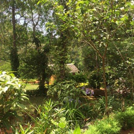 Amani Forest Camp (Emau Hill): photo0.jpg