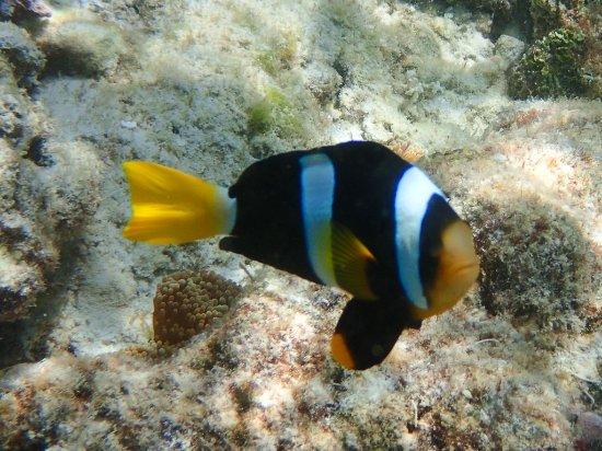 Cocoa Island by COMO: Fish