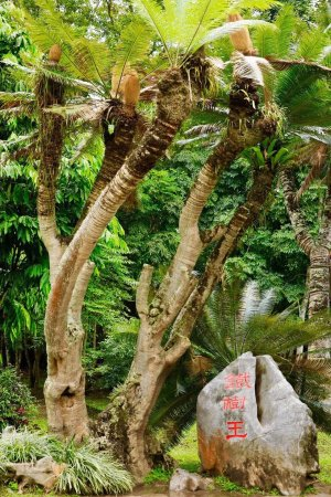 Foto de Xishuangbanna Tropical Nature reserve